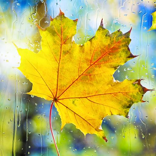 Regen-Tropfen Live Wallpapers