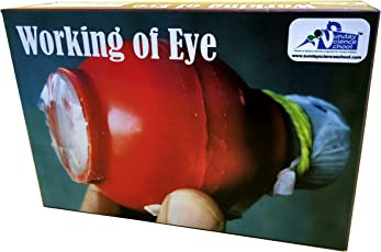 Kutuhal Working of Eye. Demonstration by Do It Yourself Working Model