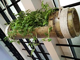 NAOE™ Hanging Wooden Planter - Pale Yellow to Green