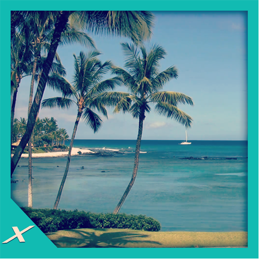 Palms Shore - Bring Hawaii to Home -