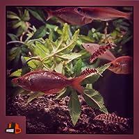 Copper Fish Tank