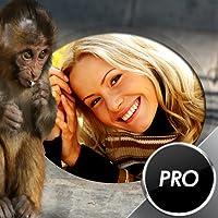Divertente Scimmia Cornici