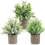 THE BLOOM TIMES Lot de 3 Petites Plantes artificielles dans des Pots pour la décoration intérieure, Mini Fausses Plantes en P