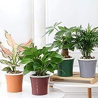 Kurtzy Self Watering Flower Pot for Garden Planters Indoor Outdoor Living Room Bedroom Balcony Table Vase Home Decor Set…
