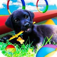 Paw Pup Dog Training