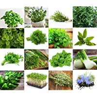 Set 'Herb Garden' 16 x 50 Seeds of The Most Popular Herbs from Portugal/Organic Farming. Great Set for Planting Outdoors or Indoors.