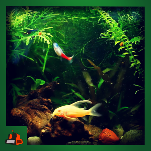 Real Green Aquarium - Go Green With Fishes
