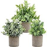 THE BLOOM TIMES Lot de 3 Petites Fausses Plantes en Plastique Rustique en Faux Pot Verdure Eucalyptus buis Plantes artificiel