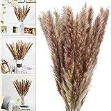 Bearbro 30 piezas de decoración de hierba de pampas, 58 cm de flores secas naturales para jarrones, ramo marrón Boho decoraci