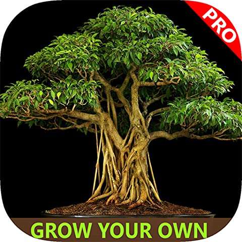 Easy Bonsai Tree For beginners - Best How To Grow Bonzai Plants Tips & Care Instruction UCC Videos, Start