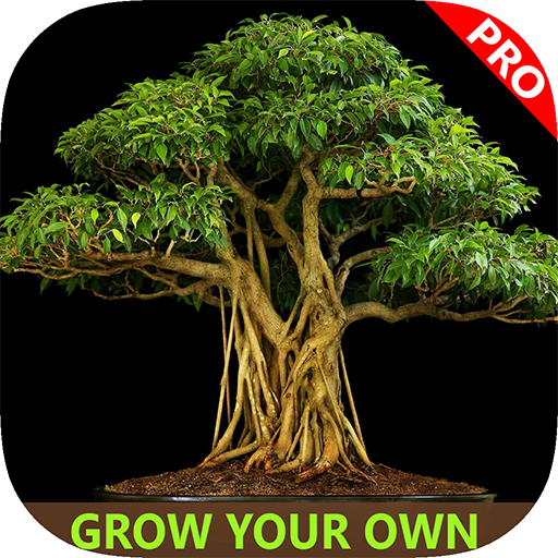 easy-bonsai-tree-for-beginners-best-how-to-grow-bonzai-plants-tips-care-instruction-ucc-videos-start