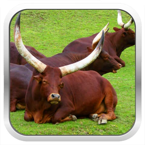 Cattle Breeds & Types