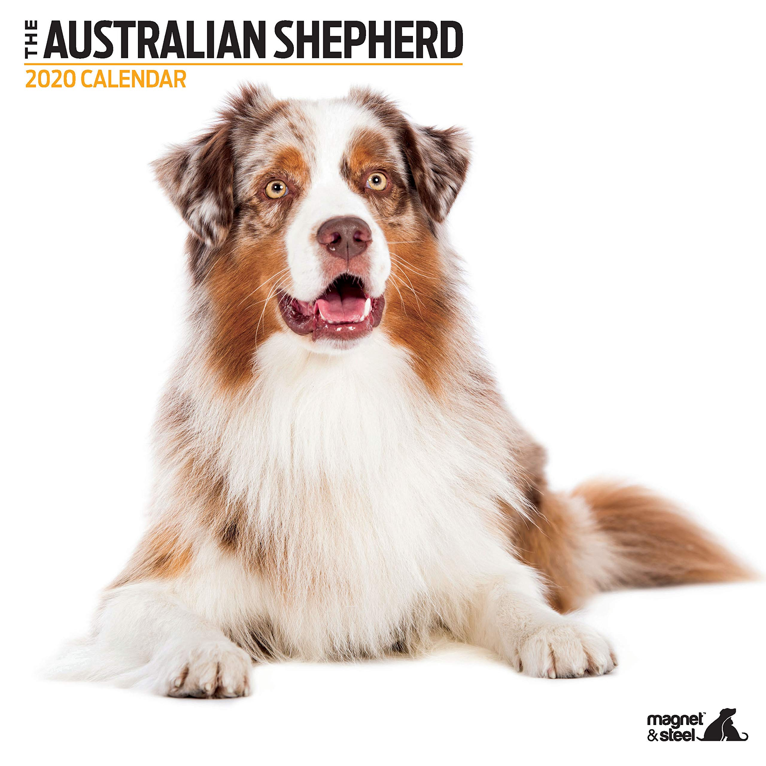 Australian Shepherd Modern 2020 Calendar