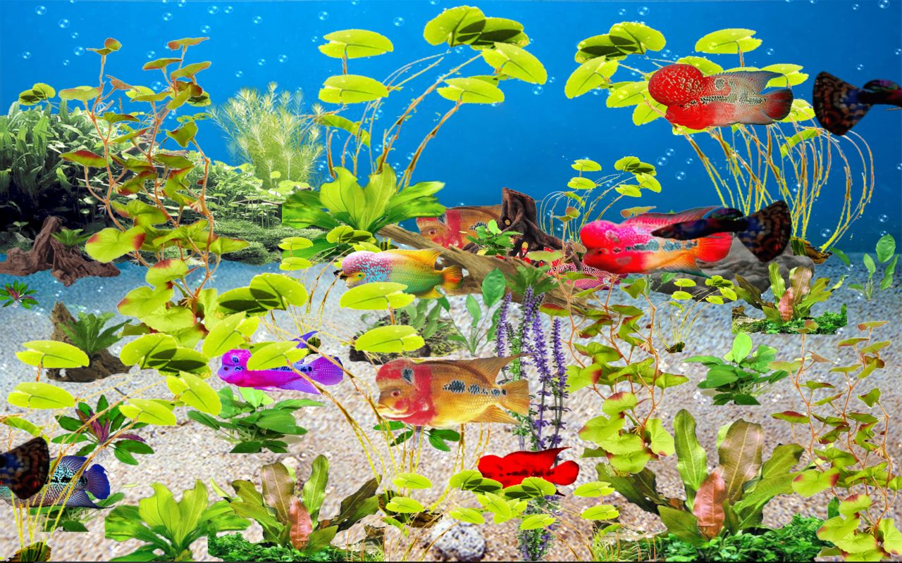 blume-horn-tropische-susswasser-aquarium-download