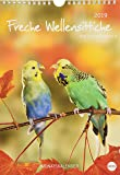 Wegler Wellensittiche A4 - Kalender 2019