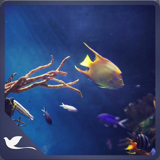 Calm Aquarium - Meditate with Fishes