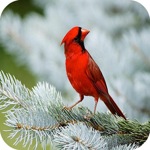 Bird Wallpaper Amazon De Apps Spiele