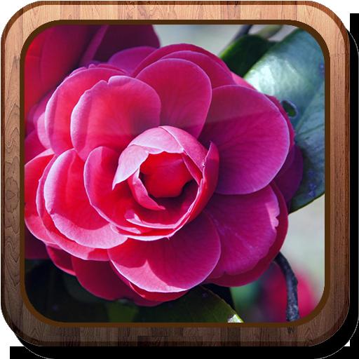 camellia-hd-live-wallpaper