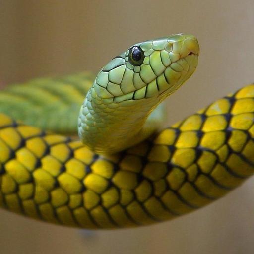 reptilien-arten-trivia-quiz