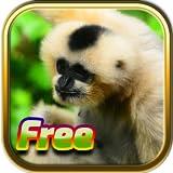 Giochi di animali gratis
