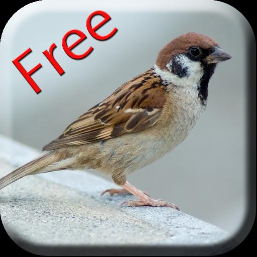 bird-sounds