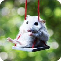 spiele für hamster