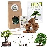 Bonsai Kit incl. eBook GRATUITO - Set con macetas de coco, semillas y tierra - idea de regalo sostenible para los amantes de