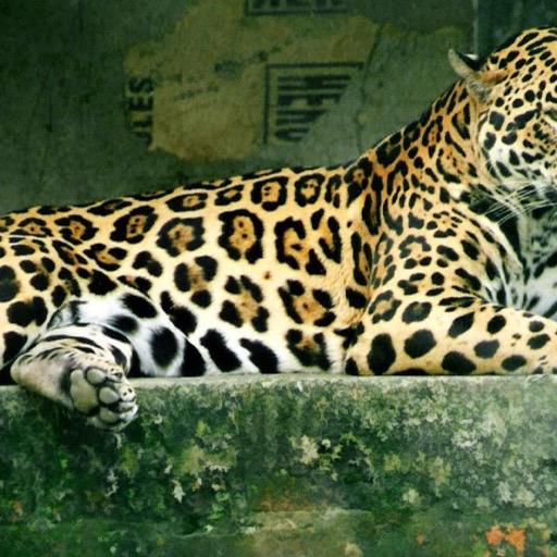 Jaguar Wallpaper Hd Wallpapers Of Jaguars Amazon Co Uk Welcome