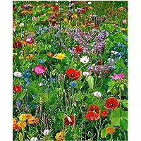 Lot de 100 graines de Fleurs sauvages en mélange - annuelles et vivaces