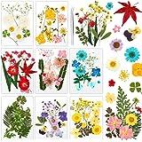 Auihiay 96 pièces 40 Sortes de Vraies Fleurs séchées pressées séchées Presse Feuilles Bougie Faisant des Fleurs pour résine B
