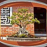 Bonsai Live Wallpapers