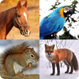 Guess The Animal