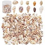 PandaHall 1 Boîte / 175g 10 Modèles Coquillages Mixtes Coquillages de Plage Décoration Océan pour Décorer la Maison, la Fête