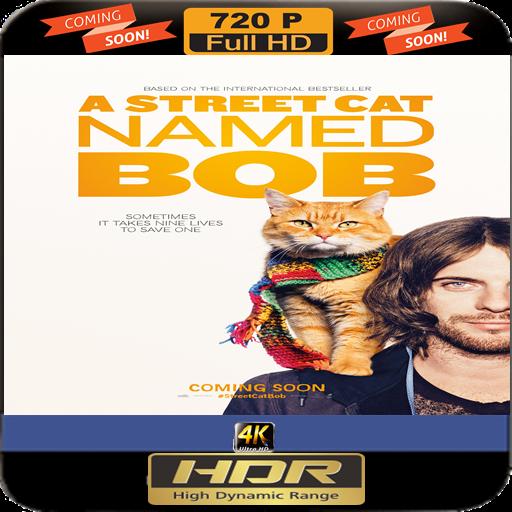 a-street-cat-named-bob-ultra-hd-dvd-digital1080p