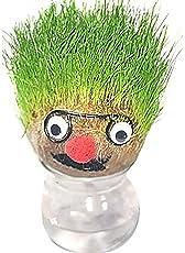 Majik New Arrival DIY Magic Grass Head Plant for Home Decor Item for Kids, 45 Gram, Green, Pack of 1