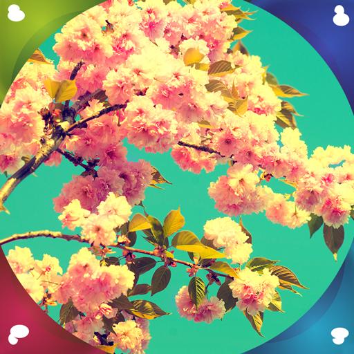 fondos-de-spring-live