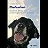 Chefsachen: Rico - ein Leben als Schattenhund im Tierheim