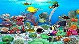 Juwelen des Roten Meeres [Download]