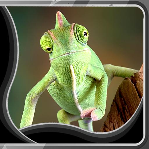 Chameleon Live Wallpapers -