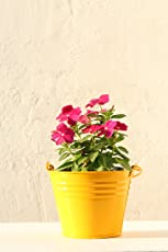 Green Gardenia Table Top/Hanging Bucket Planter-Yellow