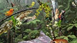 Tropischer Wald [Download]...