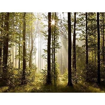 Fototapeten Wald Landschaft 352 X 250 Cm Vlies Wand Tapete Wohnzimmer  Schlafzimmer Büro Flur Dekoration Wandbilder XXL Moderne Wanddeko   100%  MADE IN ...