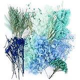 Naturelles Fleurs Séchées Scrapbooking pour Loisirs créatifs décorations Art Floral - Bleu