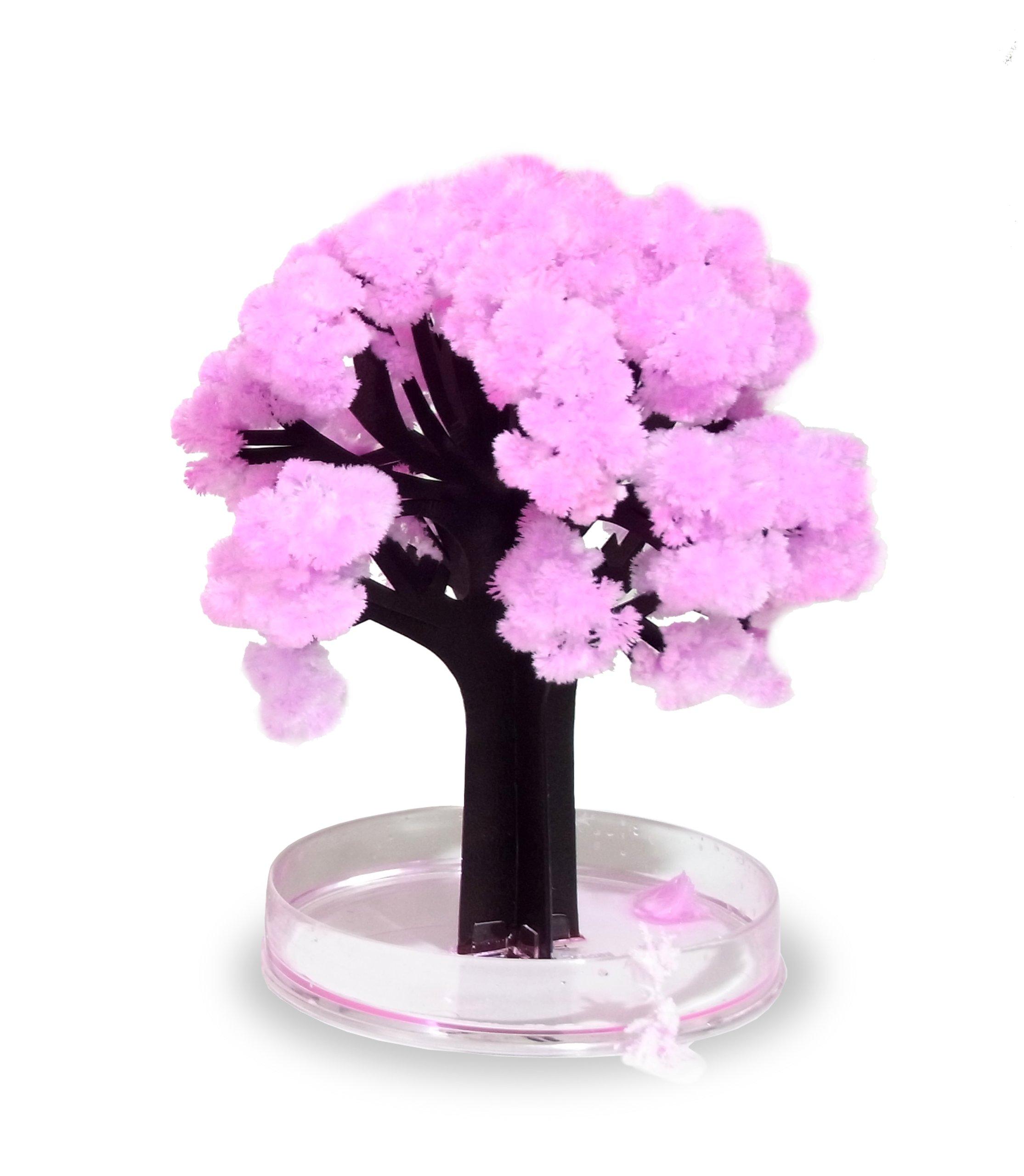 Thumbs Up! Magic Sakura El Asombroso árbol en Miniatura, Rosa