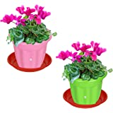 Kraft Seeds Gate Garden! Modern Light Colours Plastic Flower Pots Come with a Drill Hole in The Base for Drainage Also…