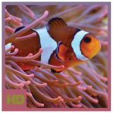 Beautiful Coral Reef Fish HD