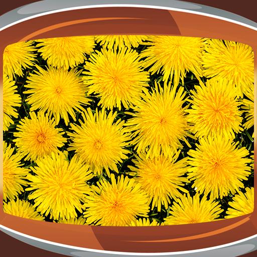 dandelion-live-hintergrundbilder