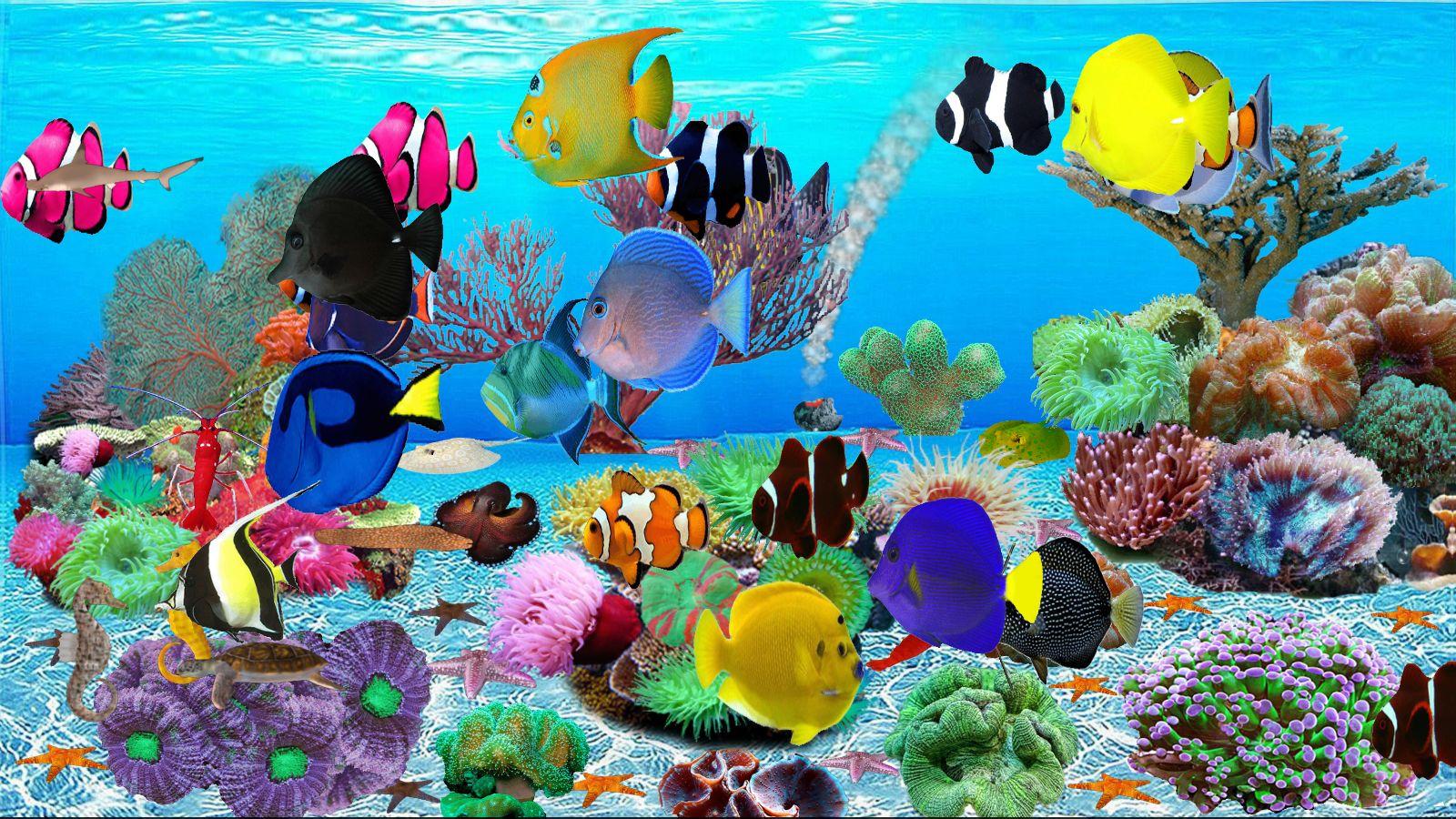Unterwasserwelt Aquarium [Download]
