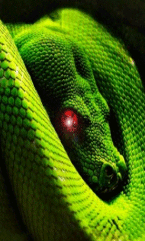 Moving Snake Live Wallpaper: Amazon co uk: Appstore for Android