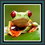 Live Wallpapers - Frosch